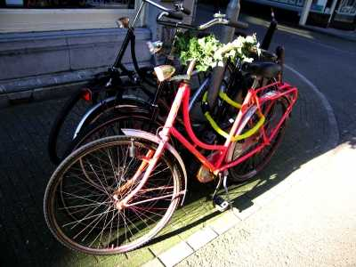 Pink bicycle with foliage on handlebars, Jordaan Amsterdam