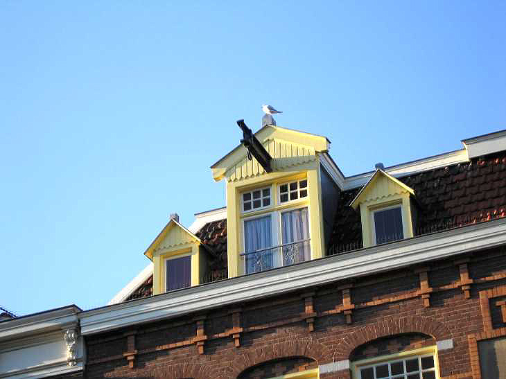 Seagull sky and window, Amsterdam