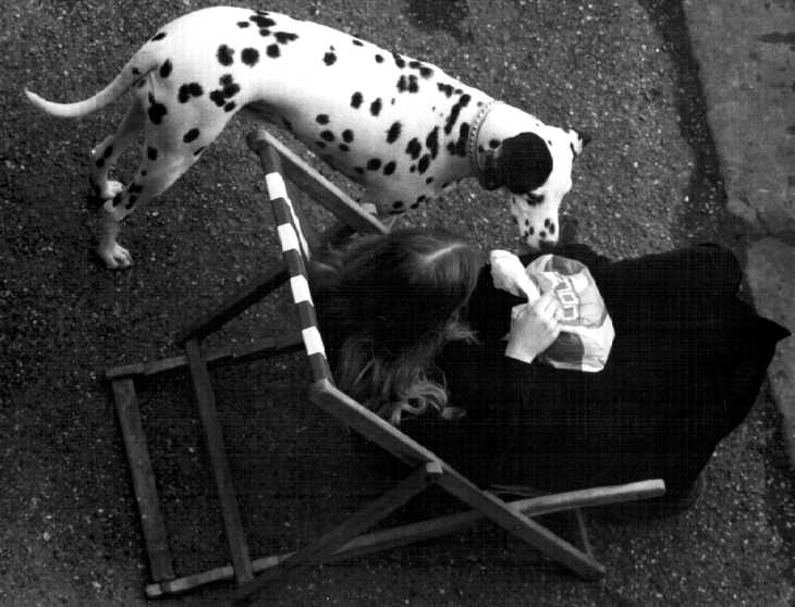 Black & white photograph. Girl and Dalmatian