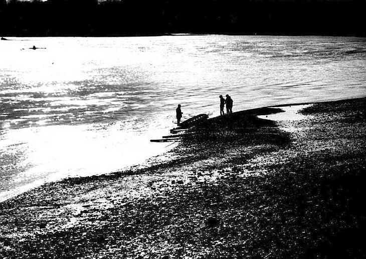 Rowers by the Thames, Hammersmith