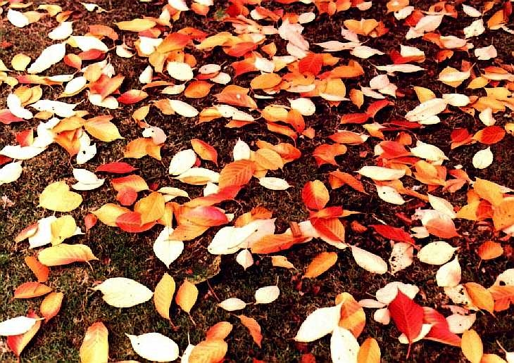Autumn leaves, Kew Gardens, London