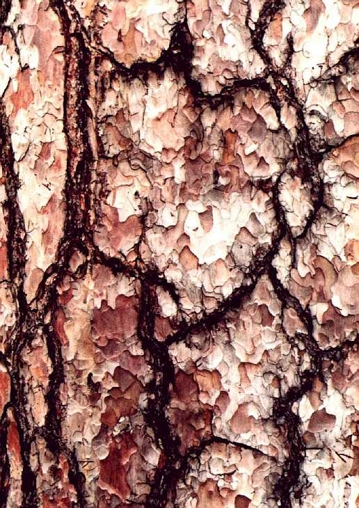 Close-up tree bark, Kew Gardens, London