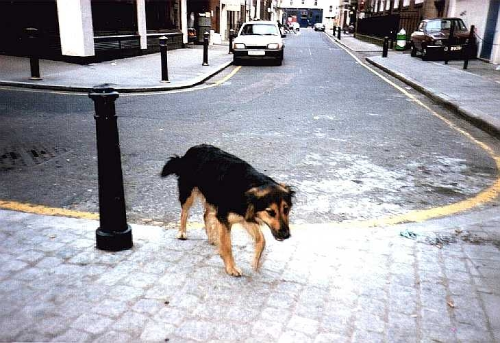 Dog in backstreets, west end of London