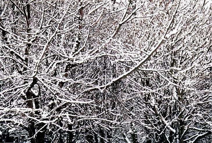Tree branches in snow, Rosemary Gardens, Islington