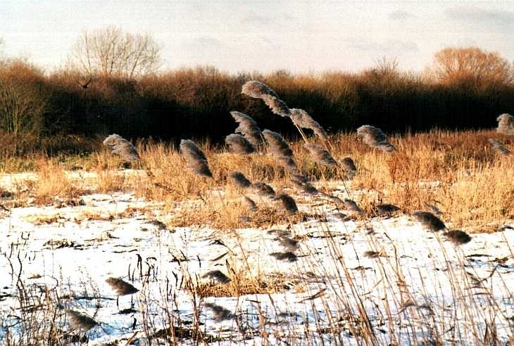 Walthamstow Marshes in snow, East London
