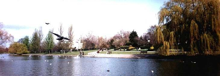 The Lake, Regent's Park, London