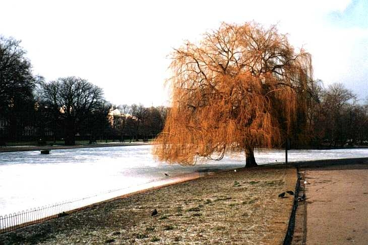 Ice on the lake, Regent's Park, London