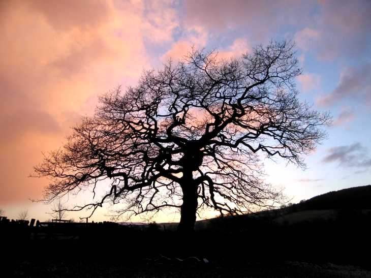 Tree and clouds at sunset, Near Grindleford, Derbyshire Peak District