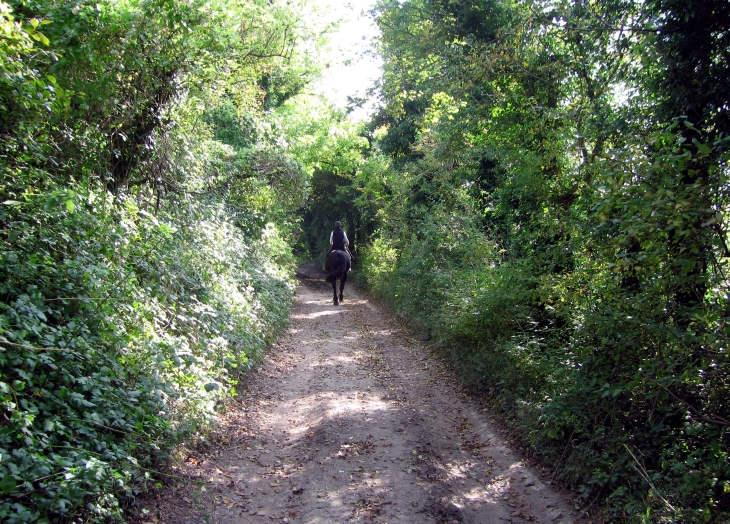 Country lane and horse rider, West Sussex