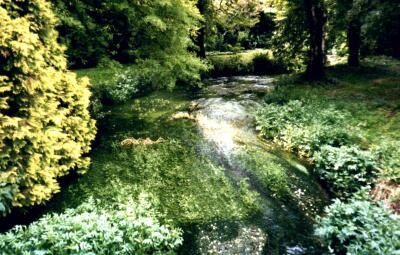 River and weed, Archer's Green, Hertfordshire