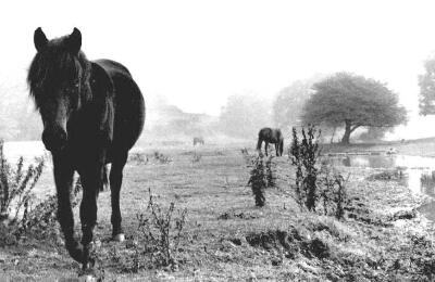 Horses, Digswell, Hertfordshire