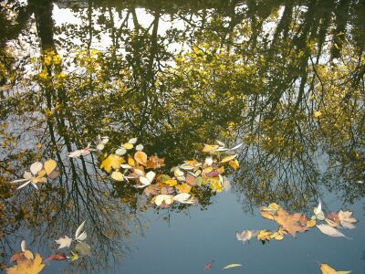 London, Islington, canal, tree reflections and autumn leaves