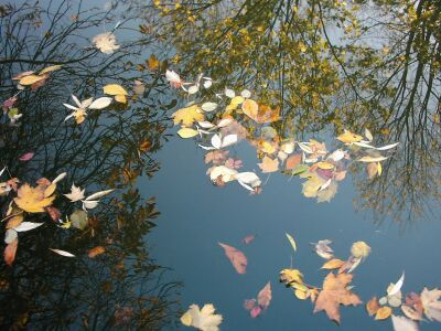Autumn leaves and tree reflections, London, Islington, canal