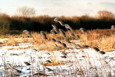 London, Walthamstow Marshes in snow