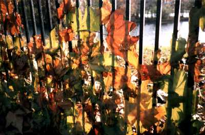 Autumn leaves blown against fence, Regent's Park, London