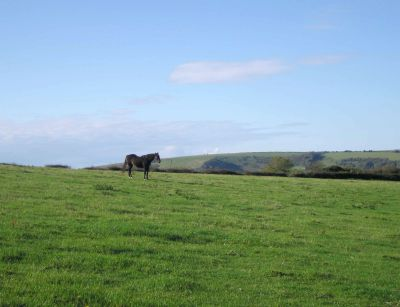 Horse on The South Downs